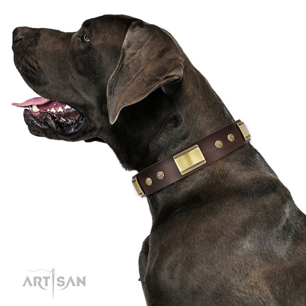 Easy wearing dog collar of genuine leather with stylish design studs