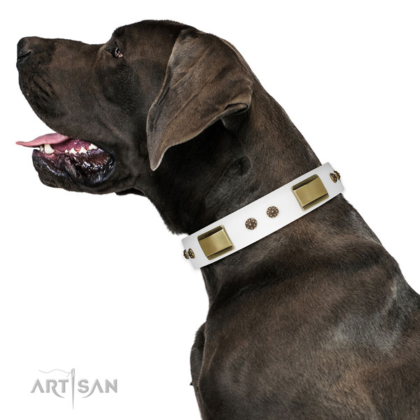 Daily walking dog collar of natural leather with designer studs