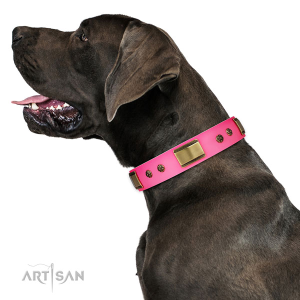 Basic training dog collar of genuine leather with exceptional embellishments
