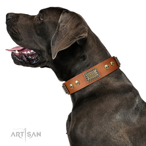 Reliable fittings on natural leather dog collar for daily walking