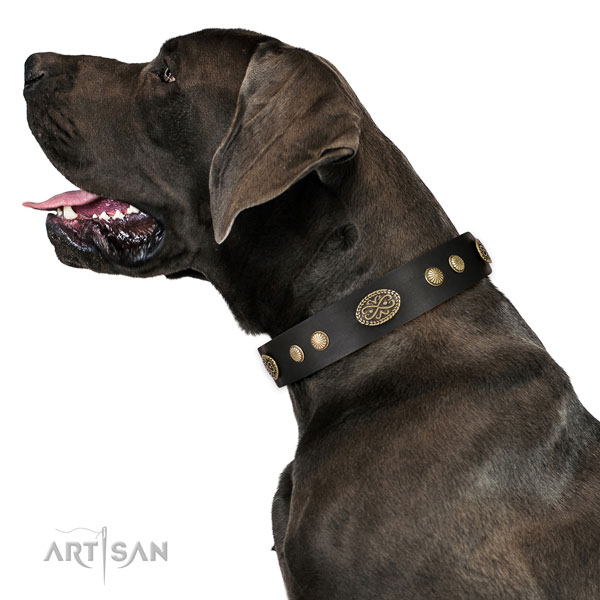 Rust resistant fittings on leather dog collar for comfy wearing