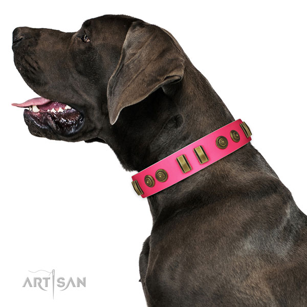Daily walking dog collar of leather with designer studs