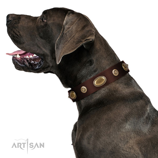Everyday walking dog collar of genuine leather with stylish design decorations