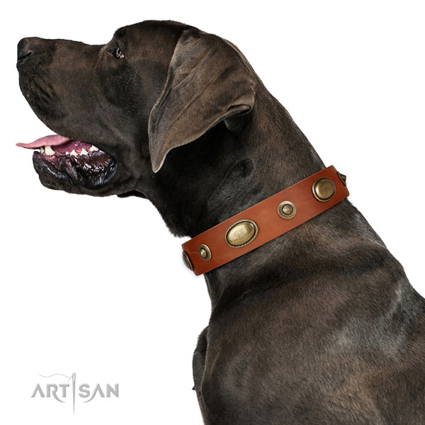 Daily walking dog collar of genuine leather with awesome embellishments