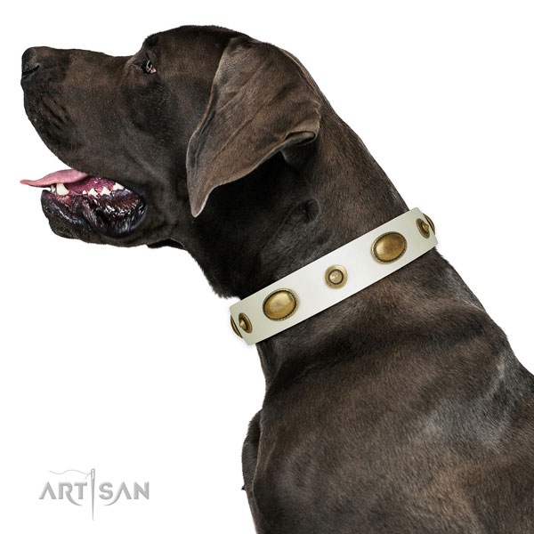 Everyday use dog collar of natural leather with trendy embellishments