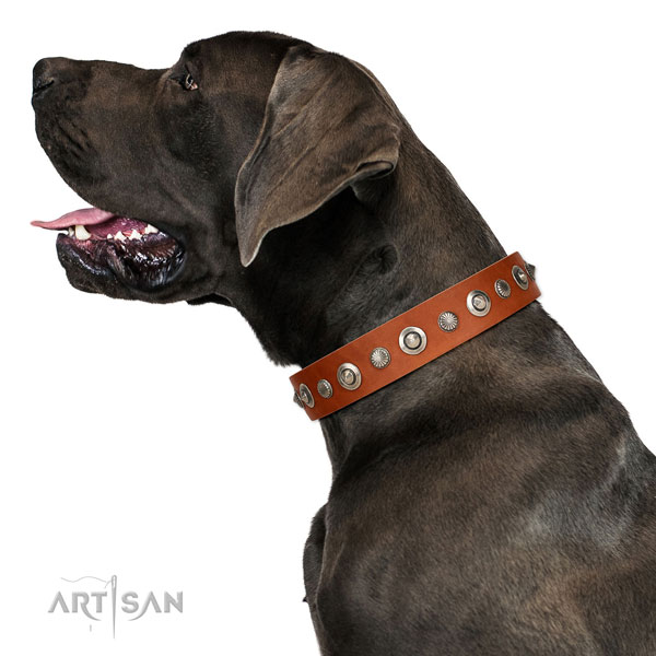 Durable full grain genuine leather dog collar with stunning adornments