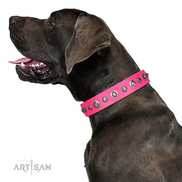Full grain natural leather collar with strong D-ring for your handsome doggie