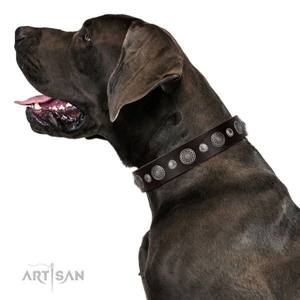 Full grain leather collar with durable D-ring for your beautiful four-legged friend