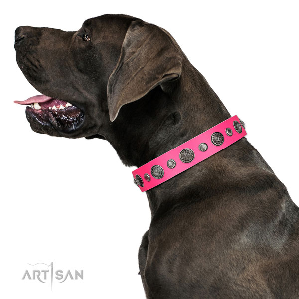 Fine quality leather dog collar with rust resistant D-ring