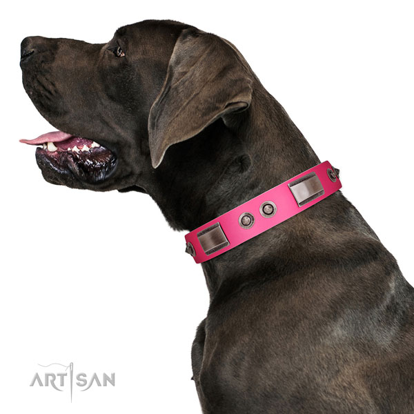 Incredible natural leather dog collar with studs