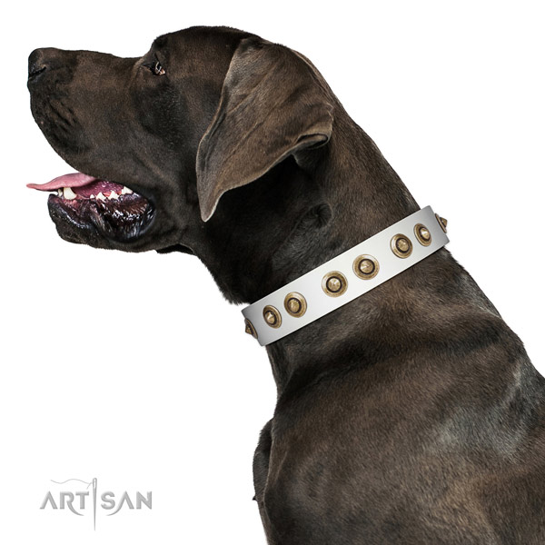 Daily use dog collar of natural leather with exquisite adornments
