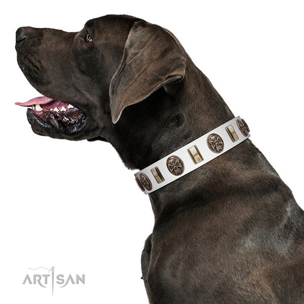 Full grain genuine leather dog collar with significant embellishments