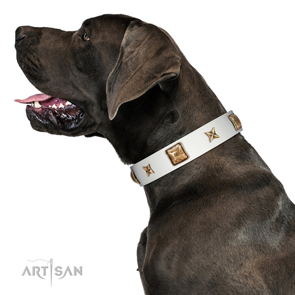 Adorned full grain leather dog collar with adornments