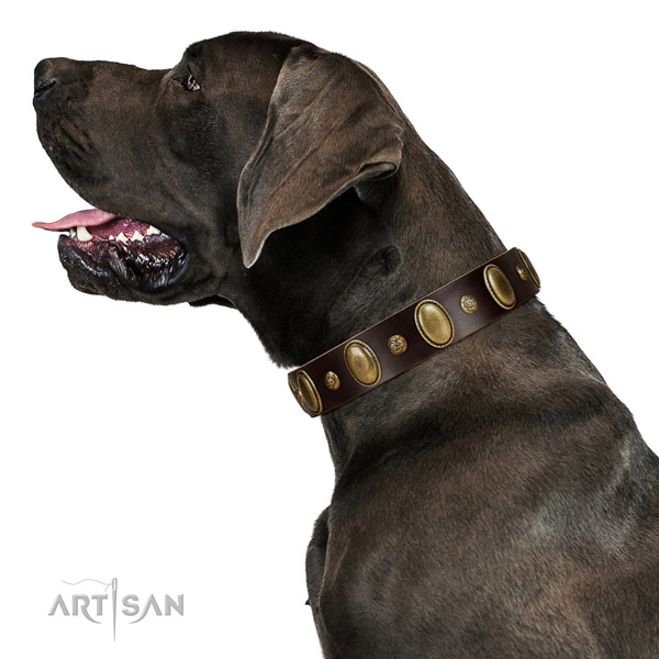 Leather dog collar of flexible material with unusual embellishments