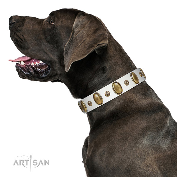 Easy wearing soft full grain genuine leather dog collar with embellishments