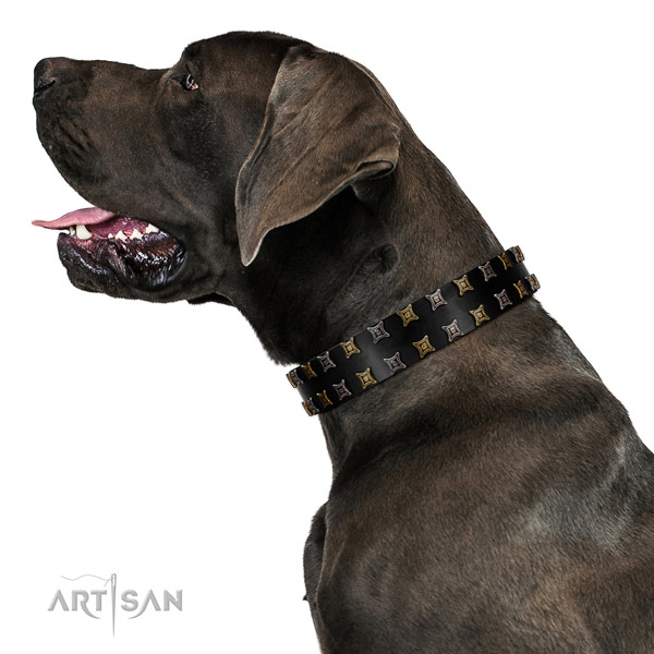High quality full grain genuine leather dog collar with adornments for your dog