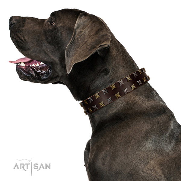 Top notch genuine leather dog collar with decorations for your pet