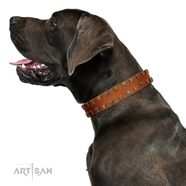 Flexible full grain genuine leather dog collar with studs for your dog