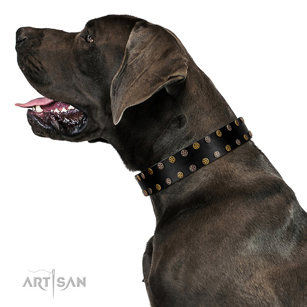 Trendy full grain natural leather dog collar with strong embellishments