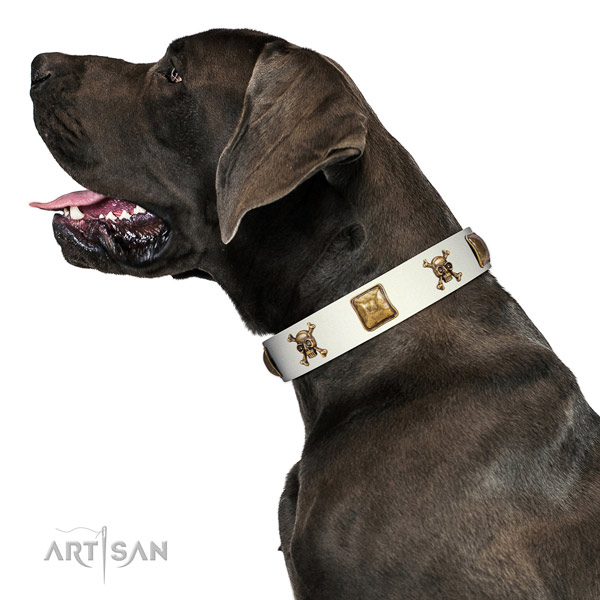 Stunning genuine leather dog collar with strong adornments