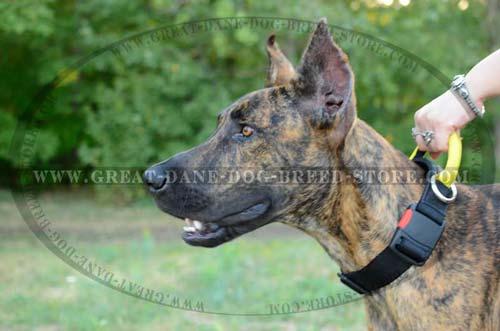 Nylon Great Dane Collar for Walking