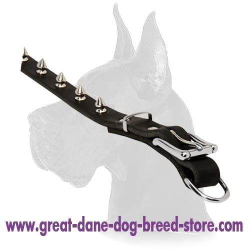 Wonderful Spiked Collar