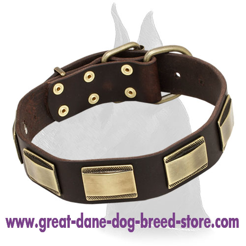 Great Dane Leather Collar With Stylish Brass Plates