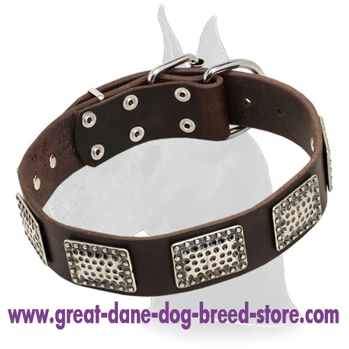 Great Dane Leather Collar With Stylish Nickel Plates