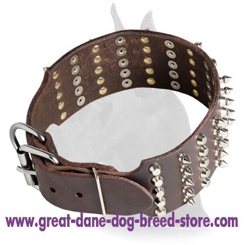 Great Dane Leather Collar Decorated with Studs and Pyramids