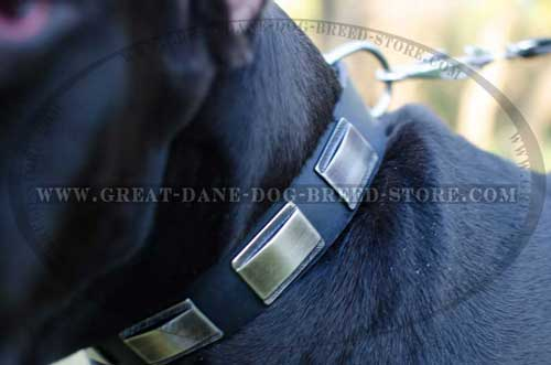 Walking Great Dane Leather Collar with plates