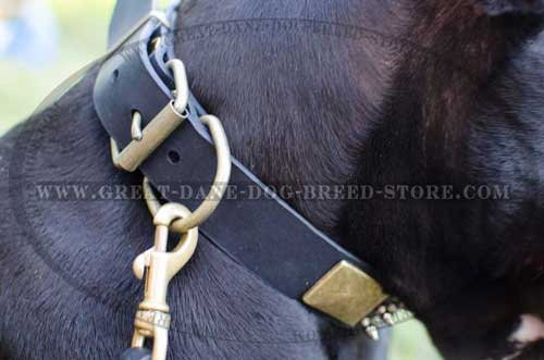 Stylish Great Dane Leather Dog Collar