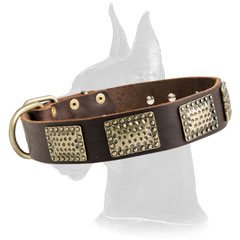 Great Dane Leather Collar with plates