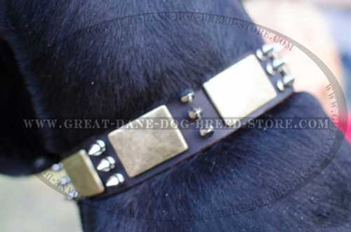 High-quality Great Dane Leather Collar with nickel spikes