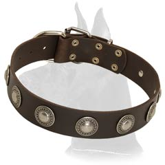 Cozy Great Dane Leather Collar