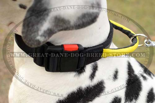 Great Dane Nylon Dog Collar with O-ring