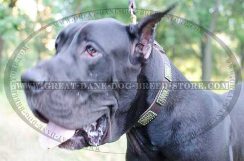 Walking Great Dane Leather Dog Collar