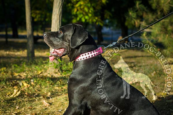 Genuine leather Great Dane collar of splendid design