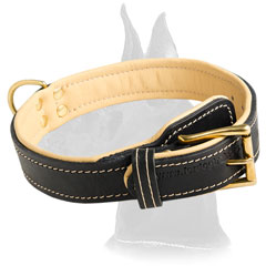 Excellent Padded Great Dane Leather Collar
