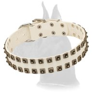 White leather Great Dane collar with nickel hardware