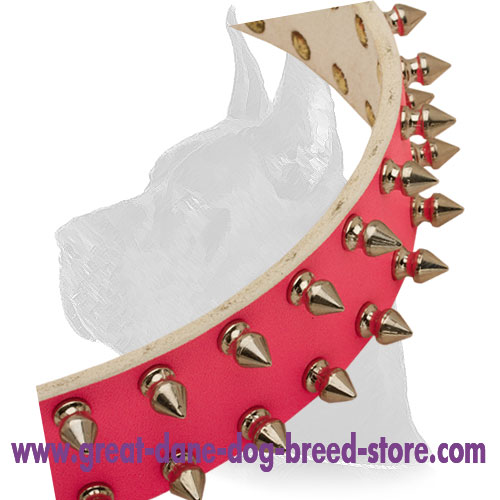 Incredible leather Great Dane collar with old nickel  spikes
