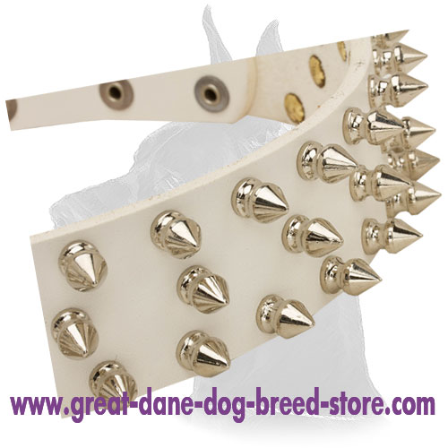 White Leather Collar for Great Dane with Attractive Design