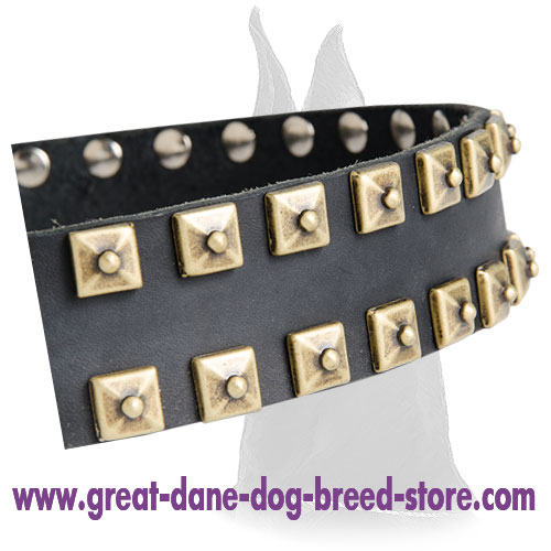 Comfortable Leather Collar With Brass Studs for Great Dane
