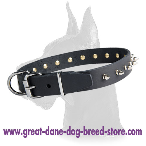 Great Dane Leather Collar With Stylish Nickel Spikes