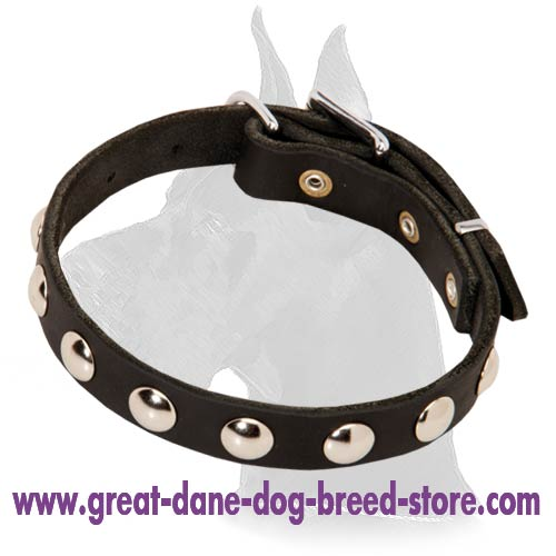 Leather Dog Collar with Plates for Daily Walks