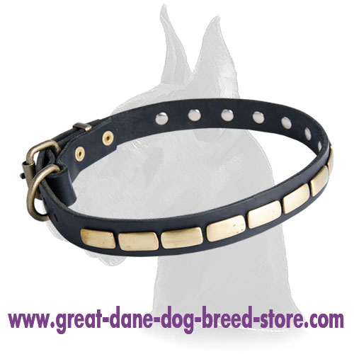 Unbelievable Leather Collar with plates