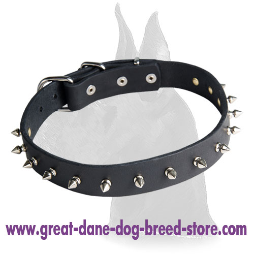 Leather Collar for Great Dane with Attractive Design