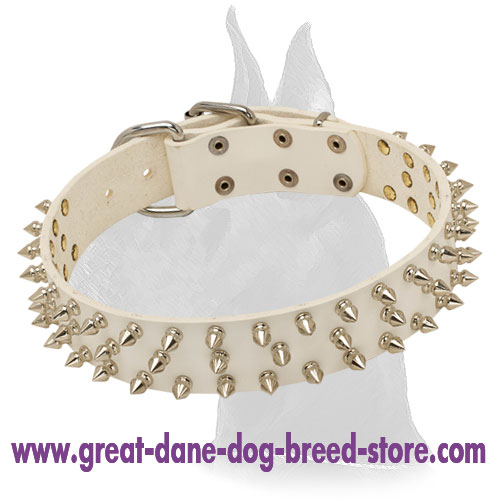 Great Dane White Leather Collar With Stylish Nickel Spikes