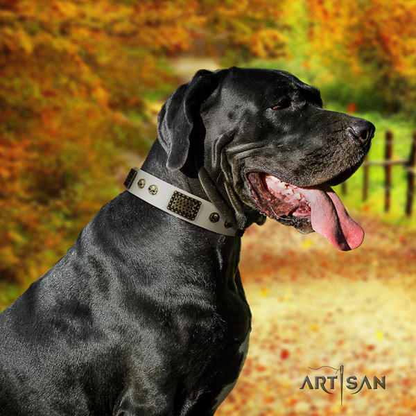 Great Dane unusual natural leather collar with corrosion proof fittings