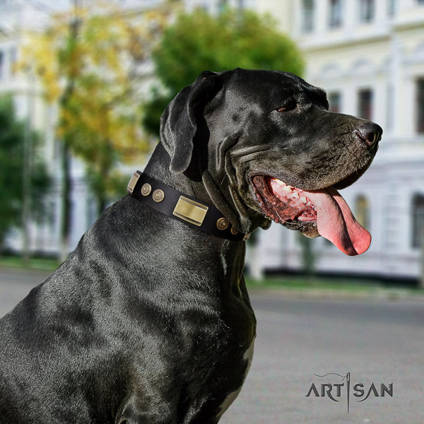 Great Dane trendy full grain genuine leather collar with corrosion resistant d-ring