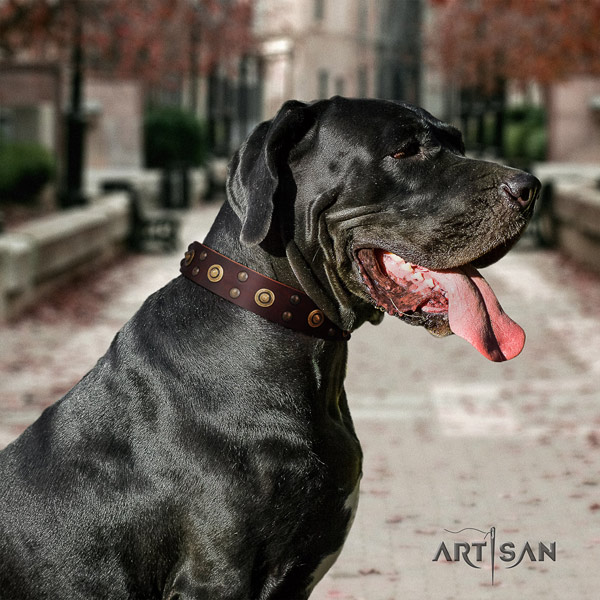 Great Dane best quality full grain leather collar with corrosion proof d-ring
